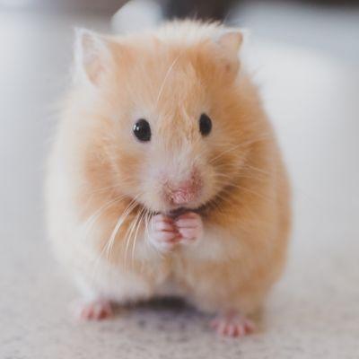 Muizen in huis oorzaak