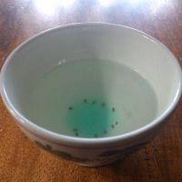Fruitvliegjes een plaag van fruitvliegjes for Fruitvliegjes in keuken